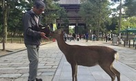Hàng trăm du khách bị cắn vì chọc phá hươu