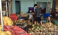 Phát hiện cơ sở dùng hóa chất tẩy trắng vỏ dừa