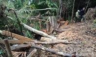 Vụ phá rừng lim cổ thụ và rừng Sông Kôn: Đình chỉ 6 cán bộ kiểm lâm