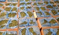Tiêu hủy gần 2,3 tấn lá chứa chất ma túy