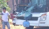 Xe khách tông xe tải vì con bò thả rông