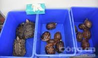 Phá chuyên án buôn bán động vật hoang dã