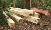 Lại phát hiện vụ phá rừng quy mô lớn ở Gia Lai