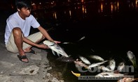 Cá chết ở hồ Hoàng Cầu: Lại do thời tiết?