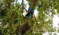 Mùa mưu sinh trên ngọn cây