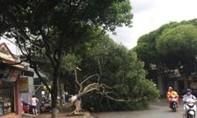 Mưa gió giật mạnh khiến nhà xưởng tốc mái, cây xanh gãy đổ