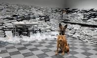 Tìm thấy hơn nửa tấn cần sa nhờ chú chó cảnh sát