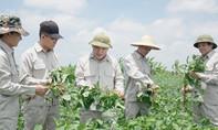 Việt Nam trồng đậu nành xuất khẩu sang châu Âu, Mỹ