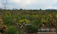Bắt kẻ chủ mưu vụ phá rừng khu vực biên giới