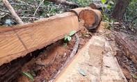 Tiếp cận công trường gỗ lậu tại Kon Tum