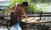 Thừa Thiên Huế: Cá chết trắng trên sông Bồ, do thủy điện?