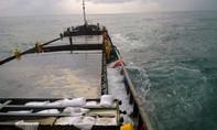 Tuyên truyền người dân không lấy gạo của tàu gặp nạn ngoài biển