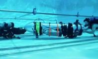 Tỷ phú Elon Musk đích thân mang tàu ngầm vào hang giải cứu đội bóng nhí