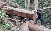 Để lâm tặc khai thác 164m3 gỗ, hàng loạt cán bộ bị kỷ luật