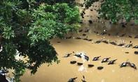 Mưa lũ lịch sử, hàng ngàn người dân Phú Thọ chạy lũ