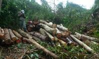 Đề nghị khởi tố 7 đối tượng phá 10,5ha rừng phòng hộ