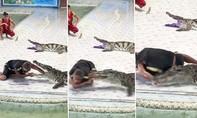 Biểu diễn với cá sấu, người huấn luyện suýt mất cánh tay