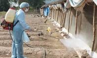 Phát hiện một gia đình mắc cúm A/H1N1