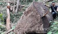 Phạt hơn 1,3 tỷ đồng 17 đối tượng khai thác, vận chuyển gỗ