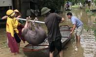 Thanh Hóa di dời 7.100 dân ở vùng ngập lũ Thiệu Dương