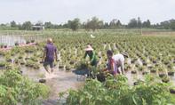 Hoa kiểng ngập sâu trong nước lũ, nông dân không kịp trở tay