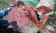 Truy trách nhiệm vụ phá rừng phòng hộ nghiêm trọng tại A Lưới