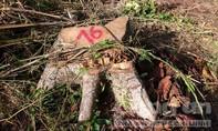 """Phát hiện vụ phá rừng trên đất đã cấp """"bìa đỏ"""" cho cán bộ"""