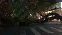 Cây xanh bật gốc chắn ngang đường ở Sài Gòn