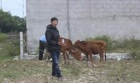 Trung tá công an bắt tên trộm 5 con bò lúc đi tập thể dục