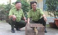 Thả rắn hổ mang chúa về rừng sau khi suýt biến thành mồi nhậu