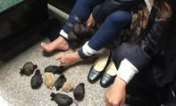 Cảnh sát bắt người phụ nữ giấu 24 con chuột nhảy dưới váy