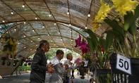 Hội thi hoa cảnh: Sân chơi thú vị của nghệ nhân, nhà vườn