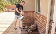 Loạt ảnh người dân và động vật ở Úc vật lộn với cái nắng gần 50 độ C