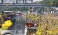 """Mai vàng rực tại chợ hoa """"trên bến dưới thuyền"""" ở Sài Gòn"""