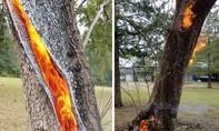 Video thân cây rỗng tự bốc cháy từ bên trong