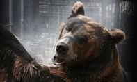 """Clip gấu khổng lồ """"nổi điên"""" tấn công HLV khi đang biểu diễn"""
