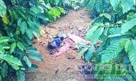 Truy tìm hung thủ sát hại một phụ nữ, cướp tài sản