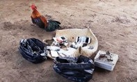 Phá điểm đá gà sau căn biệt thự, thu giữ gần 100 triệu đồng