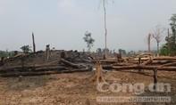 Một chủ rừng để mất hơn 1.400 héc-ta rừng