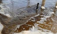 Không có mùi lạ và dầu loang ở vùng biển đổi màu đen tại Quảng Ngãi