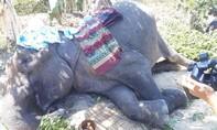 Con voi H' Băn Nơm đã qua đời ở tuổi 59