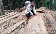 Phá rừng quy mô lớn tại huyện Kon Plông