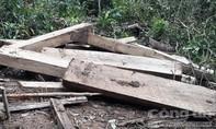 Vụ phá rừng quy mô lớn ở Kon Plông: Nhiều cán bộ bị xử lý