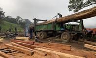 Phá rừng quy mô lớn ở vùng giáp ranh Đắk Lắk - Khánh Hoà