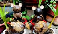 Cận cảnh kiểng chuột bán Tết giá bạc triệu ở miền Tây
