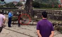 Đi bộ trên đường, thanh niên bị cành cây rơi trúng tử vong