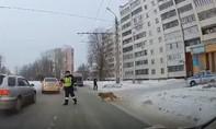 Cảnh sát dừng phương tiện, giúp chú chó bị thương sang đường