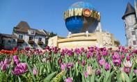 """Mê mải giữa """"đồi"""" tulip ngạt ngào hương sắc tại Bà Nà"""