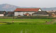 Triều Tiên có nguy cơ thiếu lương thực