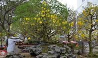 Chợ hoa xuân 'phố nhà giàu', vắng bóng cây cảnh tiền tỷ